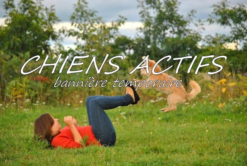 Forum sur les sports canins: Chiens actifs