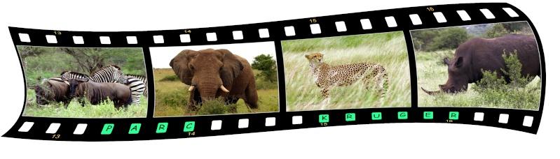 Créer une pellicule photo-diapo avec photoshop - Page 3 Sans_t16