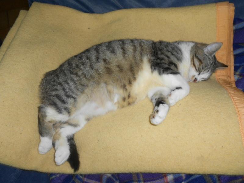 Besoin d'aide pour  retrouver mon chat svp!! 88524_13