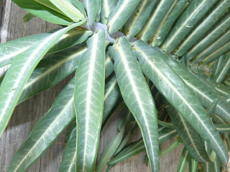 plante ou mauvaise her? P1120411