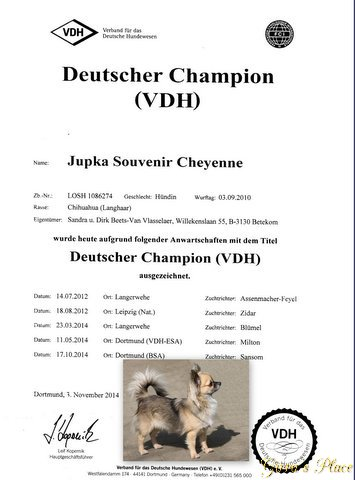 Ch. Jupka Souvenir Cheyenne VDH Champ'14 Kampio10