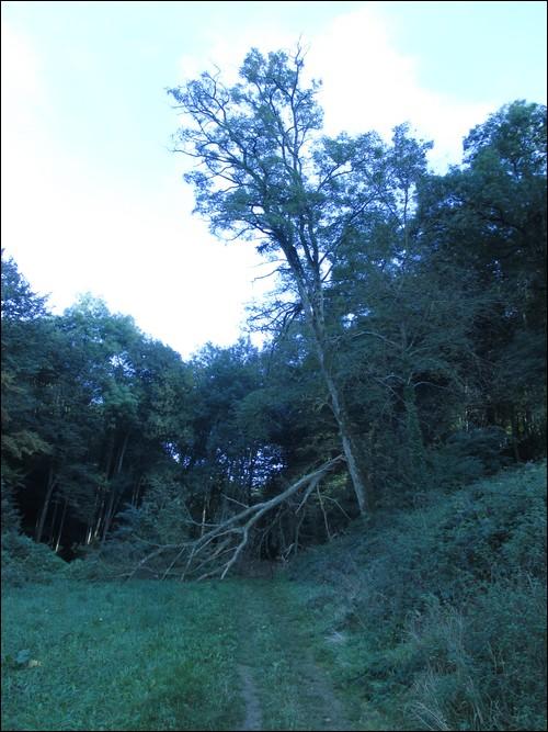 [Rhône-Alpes] La Forêt de Vallin (38)  Vallin10