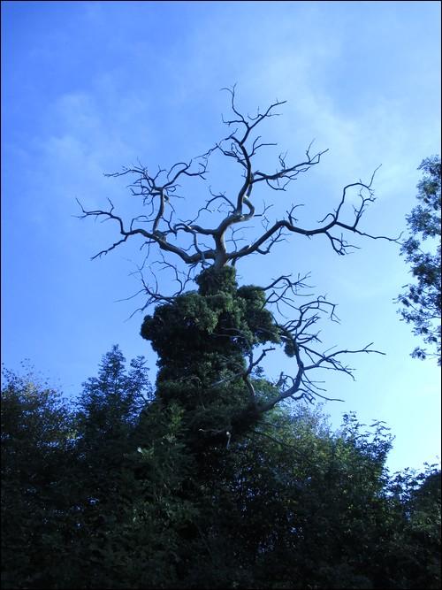 [Rhône-Alpes] La Forêt de Vallin (38)  Vallin13