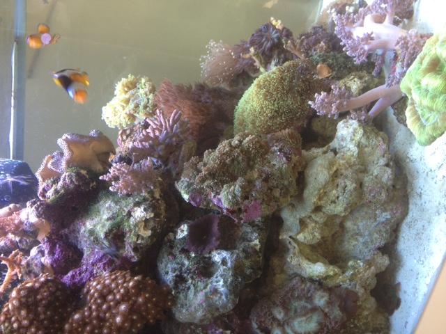 Le Red Sea Max 130D d'Alexpilon Image111