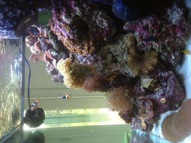 Le Red Sea Max 130D d'Alexpilon Image210