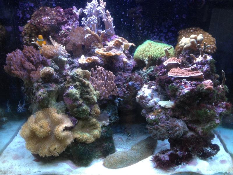 Le Red Sea Max 130D d'Alexpilon Img_0311