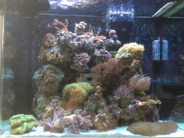 Le Red Sea Max 130D d'Alexpilon Photo310