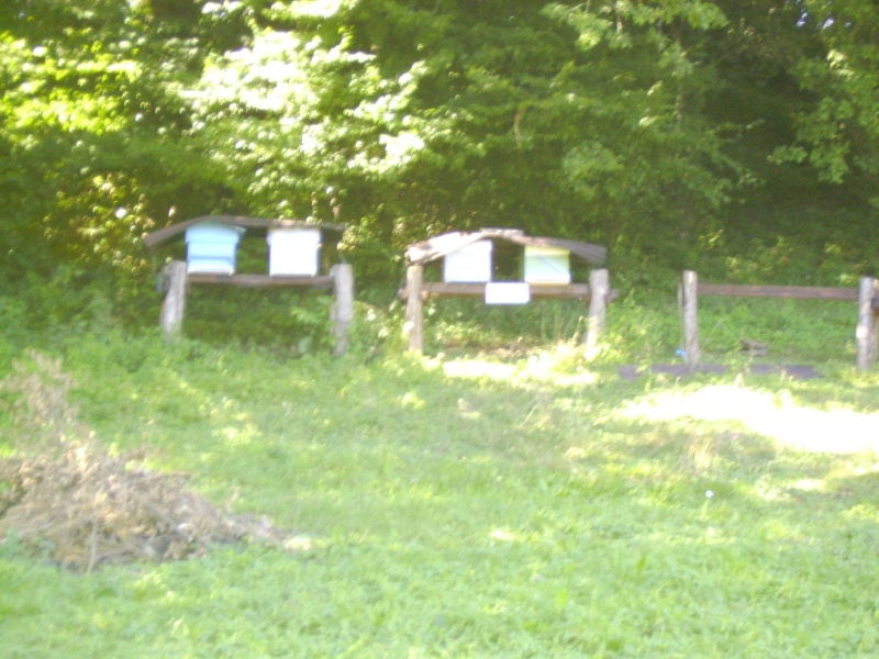 mes ruches Img_0312