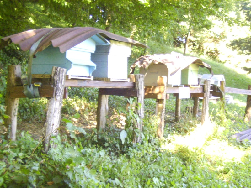 mes ruches Img_0313