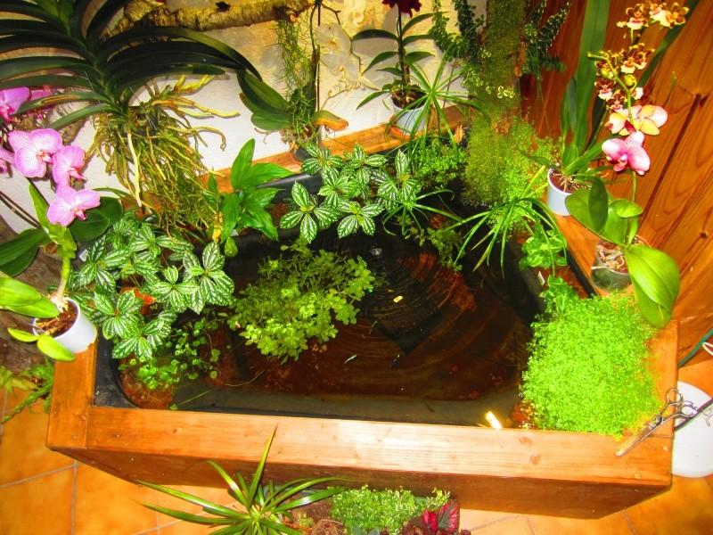 bassin d'intérieur Img_1710