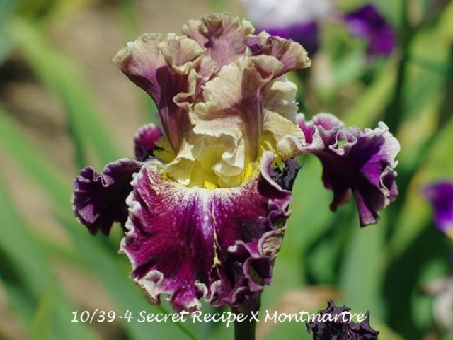 votre plus bel iris 10-39-10