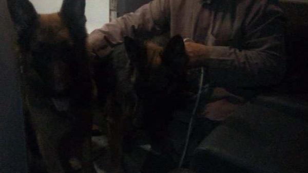 القبض على غفير مدرسة بالقاهرة أطلق كلاب الحراسة على الطلاب لمنعهم من اللعب أمام المدرسة 011137