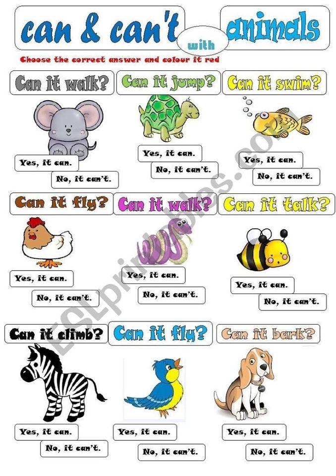 Can. Can't.. مراجعة لغة انجليزية للصف السادس 11327