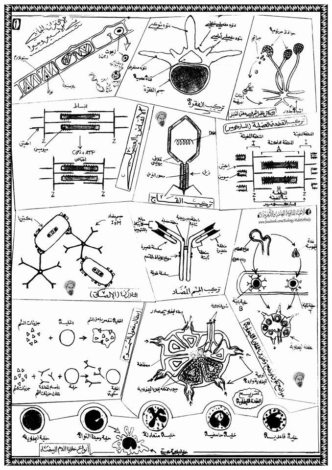 أطلس جميع رسومات الأحياء المقررة على طلاب الثانوية العامة 17144