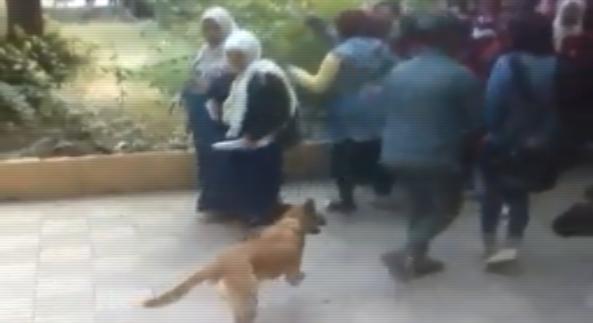 إحالة واقعة اقتحام أولياء أمور لمدرسة بكلب وسحل طالبة للنيابة 50020