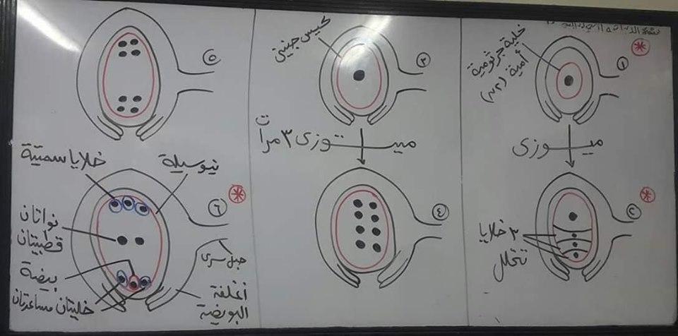 اهم رسومات منهج الاحياء للصف الثالث الثانوي بخط أ/ عماد بدوي 59977010