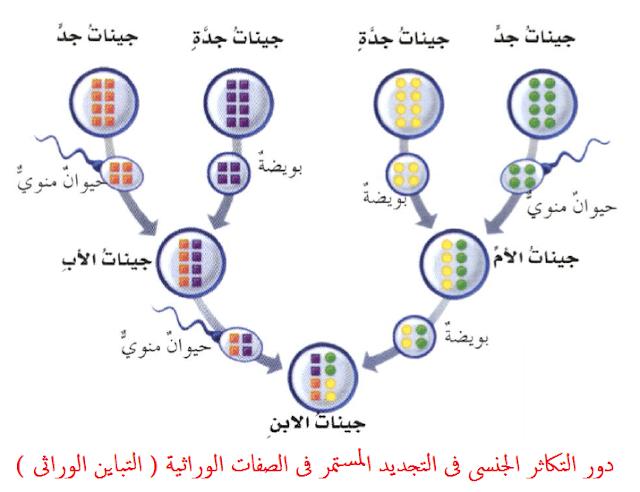 المراجعة النهائية أحياء 3 ثانوي    طرق التكاثر فى الكائنات الحية D8afd910