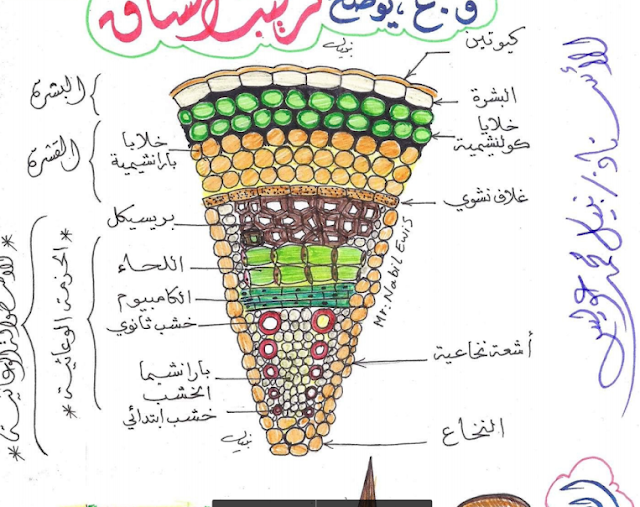 مراجعة أهم رسومات أحياء تانية ثانوى ترم أول في 6 ورقات لـ أ/ نبيل عويس Snag-013