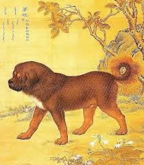 Le Dogue du Tibet au fil du temps... Xavier11