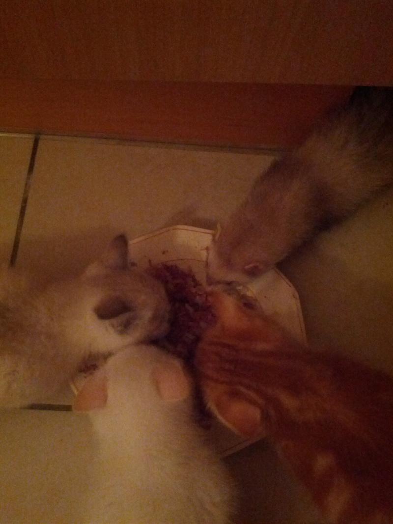 La vie à la maison :Diamant ,Enja ,Bisou ,Fidji et les chatons Img_2016