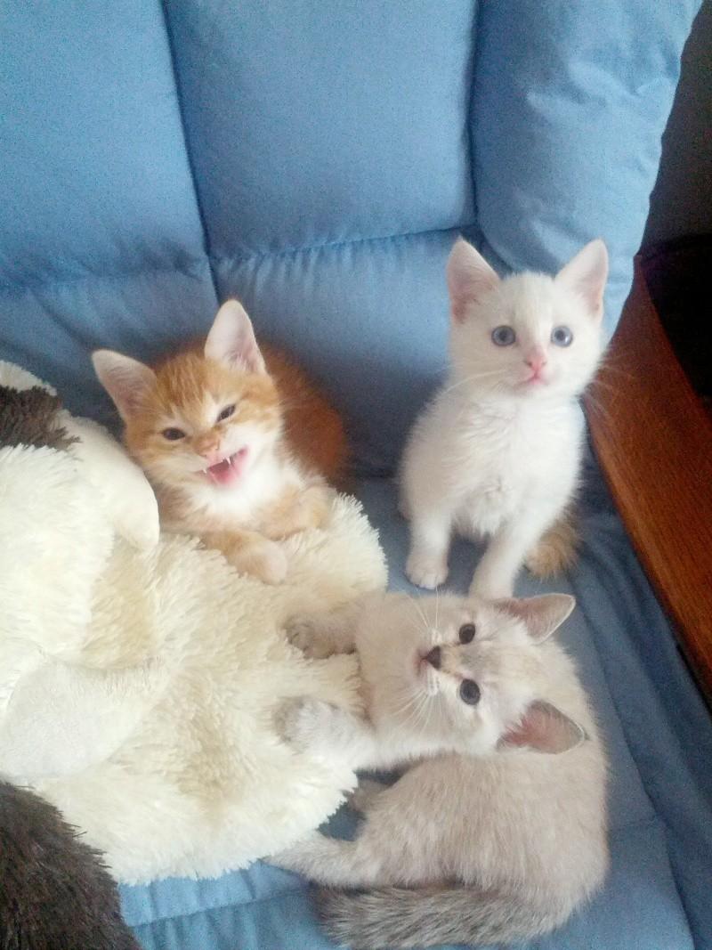 La vie à la maison :Diamant ,Enja ,Bisou ,Fidji et les chatons Img_2024