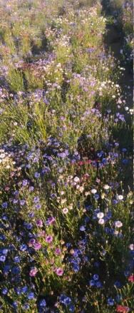 Cultures florales Dsc_0314