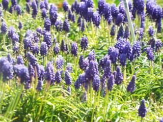 Dans mon jardin Mars_212
