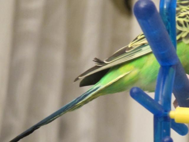 Oiseaux qui s'attaquent Img_3012