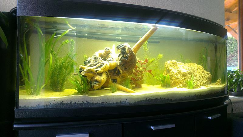 Mon aquarium de A à Z... C'est fini :( - Page 4 Imag2113