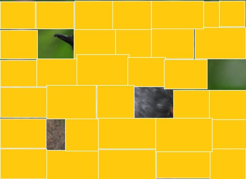 animal volant - ptit loulou - 6 novembre trouvé par Paul et Ajonc Etoile19