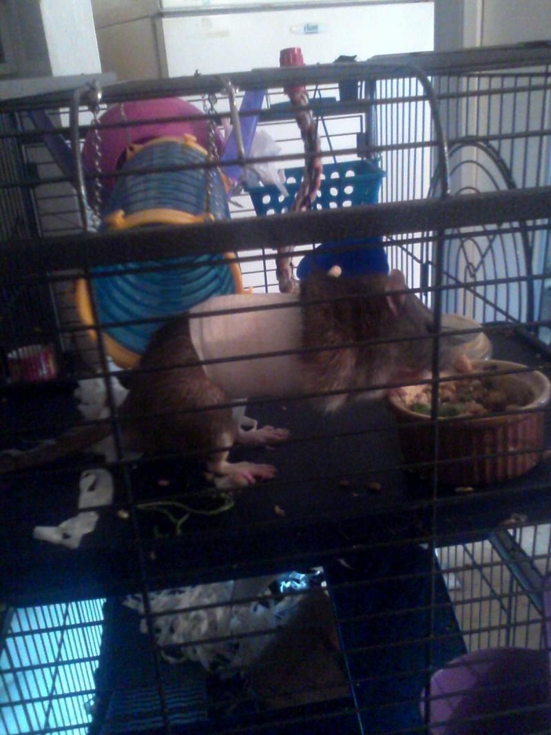 Le rat saucisson - Protéger une plaie après opération - Page 10 Img_2020