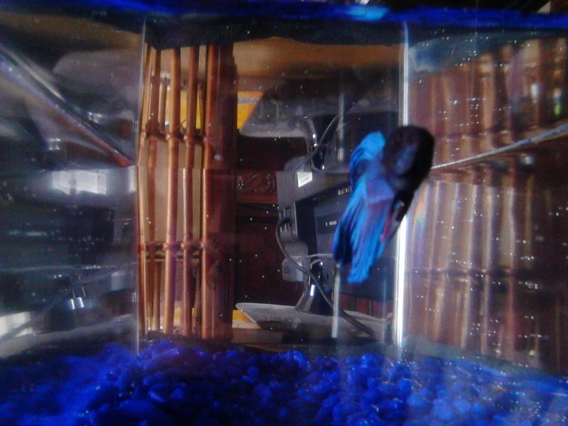Mon petit Blue Img_2012
