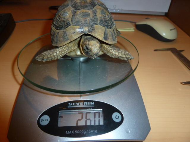 Identification de ma tortue P1100111
