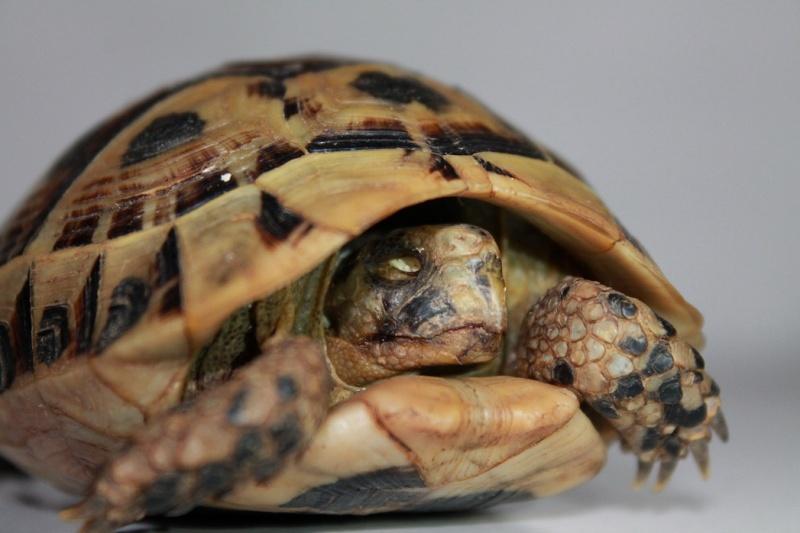 Problème a l'œil de ma tortue besoin d'aide Img_3332