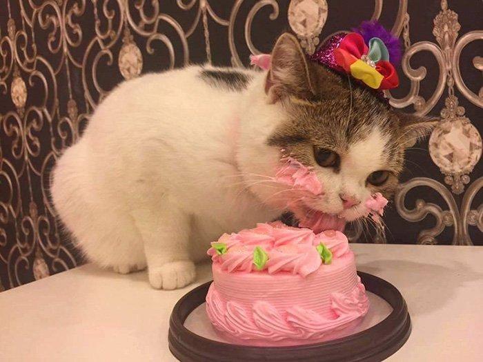 Joyeux anniversaire à CAT83 A10