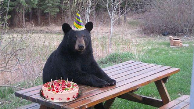 happy Birthday... Baloo07 Alaska10