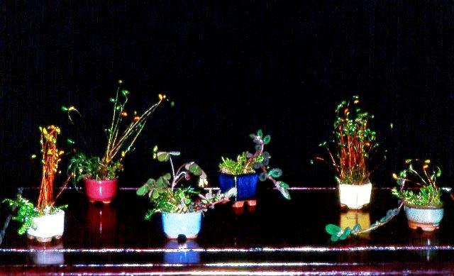 L'importanza di proteggere il substrato dei Bonsai. Foto1g10