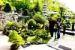 L'importanza di proteggere il substrato dei Bonsai. Museob10