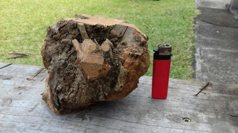 Blaireaux Marfin manches en bruyère 20181135
