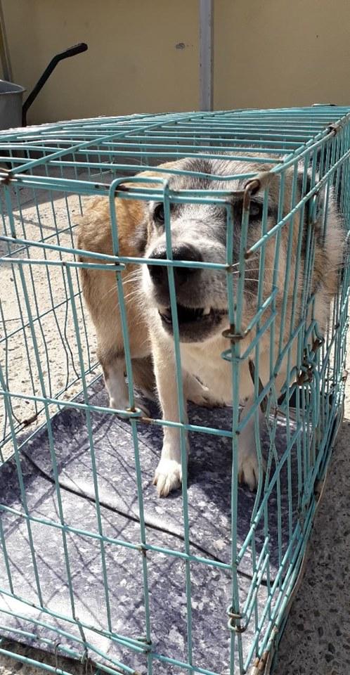 LOONA - femelle née le 09/08/2012, EN FA DANS LE 92 - sortie de l'équarrissage le 08/09/2020 - Parrainée par Sylvie H. SC-SOS-R-30MA- 11899510
