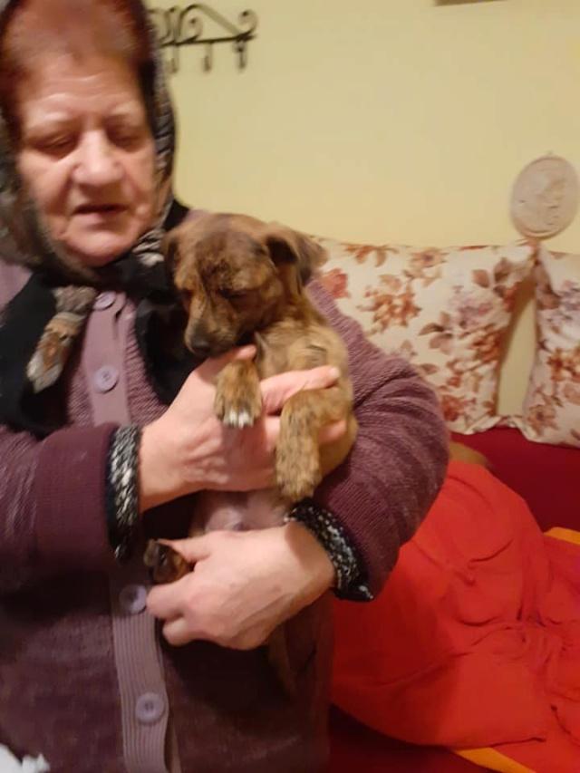 GUILLY mâle né en Septembre 2020, sauvé de Pallady le 18/11/2020-R-SC-SOS 13027211