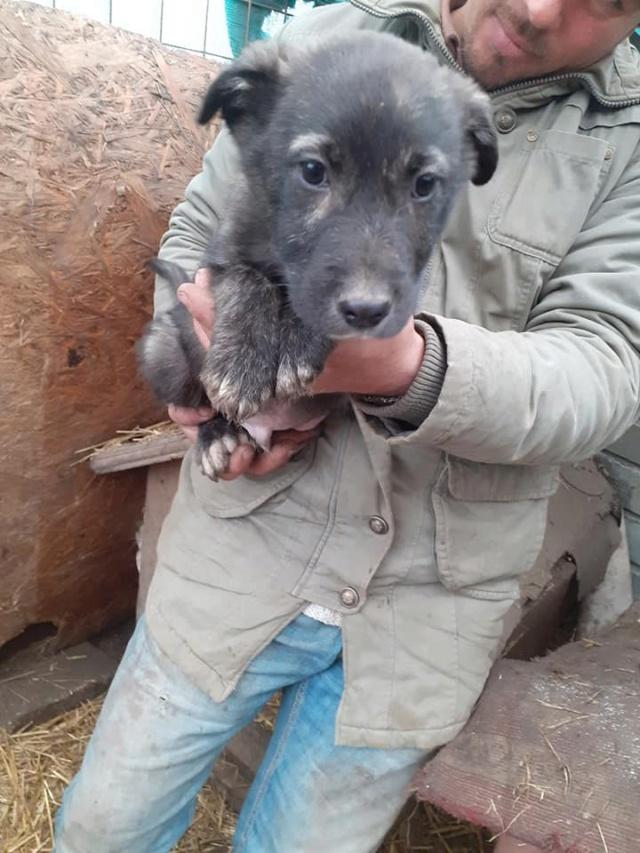 BLACK-PEARL, mâle noir né en Septembre 2020, Nr 14015.Bébé de Bakari-R-SOS-SC 13242410