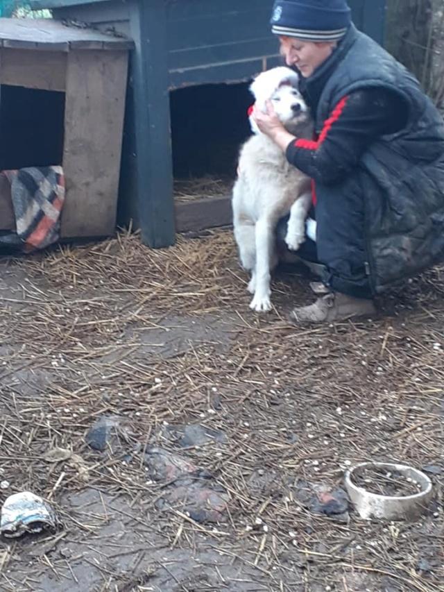 STAR -femelle née en 2018, trouvée le 24 Décembre 2020 devant le refuge - parrainée par amlcte-R-SOS-SC 13273410