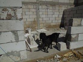 CONSTRUCTION D'UNE PIECE POUR LES CHIENS EN LIBERTE 42849510