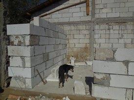 CONSTRUCTION D'UNE PIECE POUR LES CHIENS EN LIBERTE 42919910