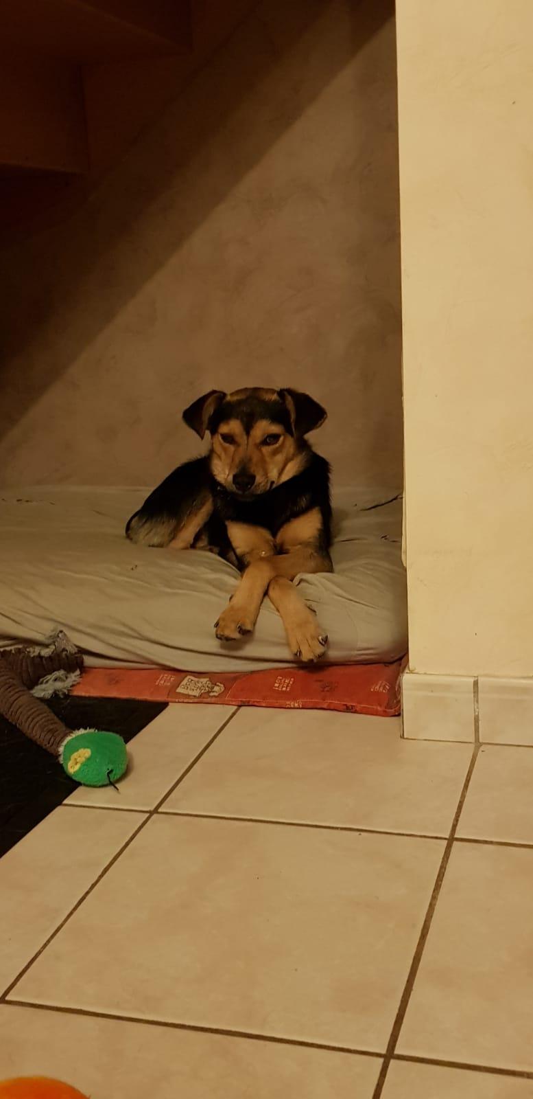 nubio - NUBIO, male né le 10/10/2016, trouvé dans un champs- marrainé par Natarya - R-SC-30MA Whats381