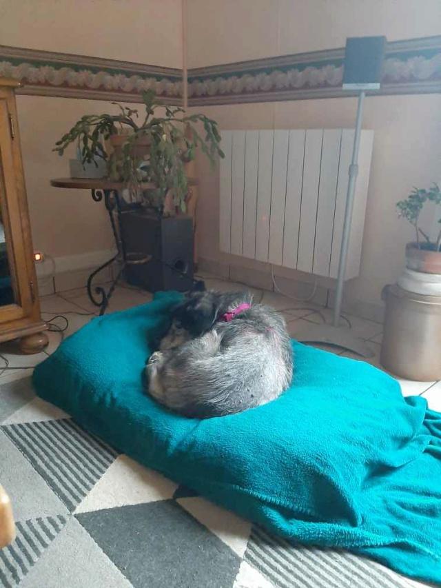 GRIZIE - Taille moyenne - Femelle née le 10/08/2009 EN FA DANS LE 28 - Marrainée par Sabfly -R-SC- SOS - Page 2 Whats559