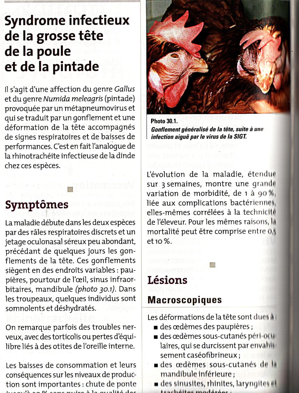 poule pâle + dyspnée Img10
