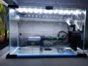 Lancement d'un 180 litres pour Guppys Img_2012
