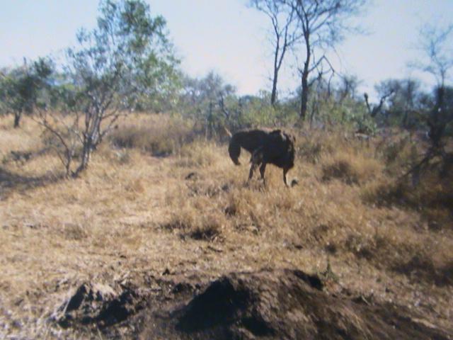 Afrique du Sud Dsc05218